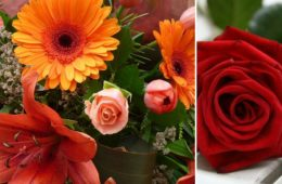 Bright Blooms & Red Roses